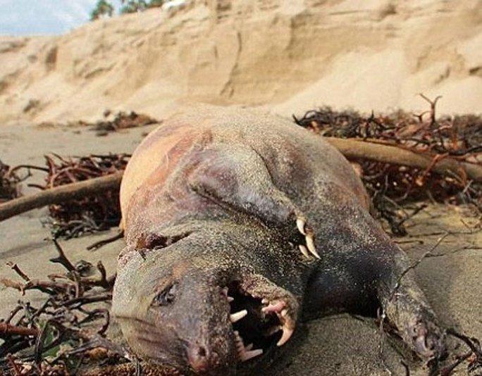 Những quái vật dị dạng nhất từng dạt lên bờ biển