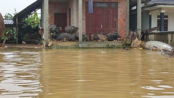 Miền Trung: Mưa lớn, các thủy điện xả lũ, nhiều vùng bị chia cắt - Ảnh 7.