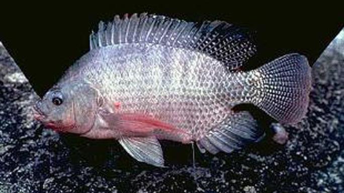 Điểm mặt 5 loài sinh vật ngoại lai gây mối nguy cao - Ảnh 3.