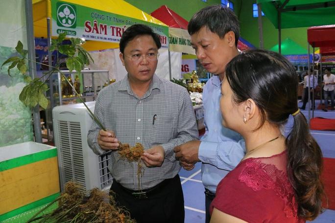 Sâm Ngọc Linh gần 100 triệu/kg vẫn đắt như tôm tươi - Ảnh 13.