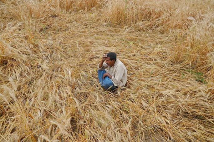 Ấn Độ: Trời nóng, nông dân tự tử nhiều hơn? - Ảnh 1.