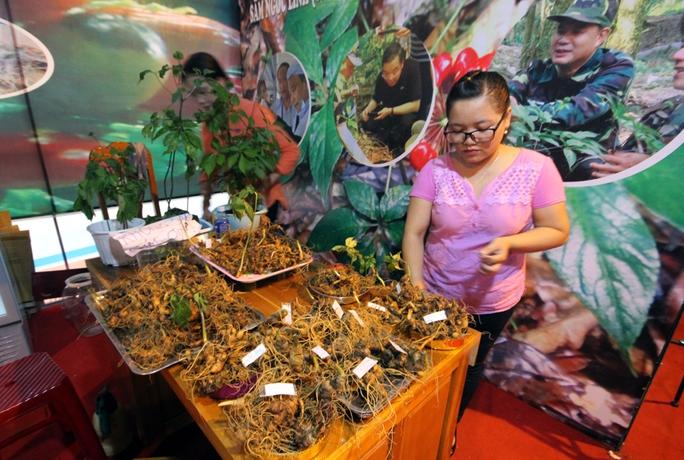 Bán được củ sâm giá 120 triệu đồng tại lễ hội sâm Ngọc Linh - Ảnh 6.