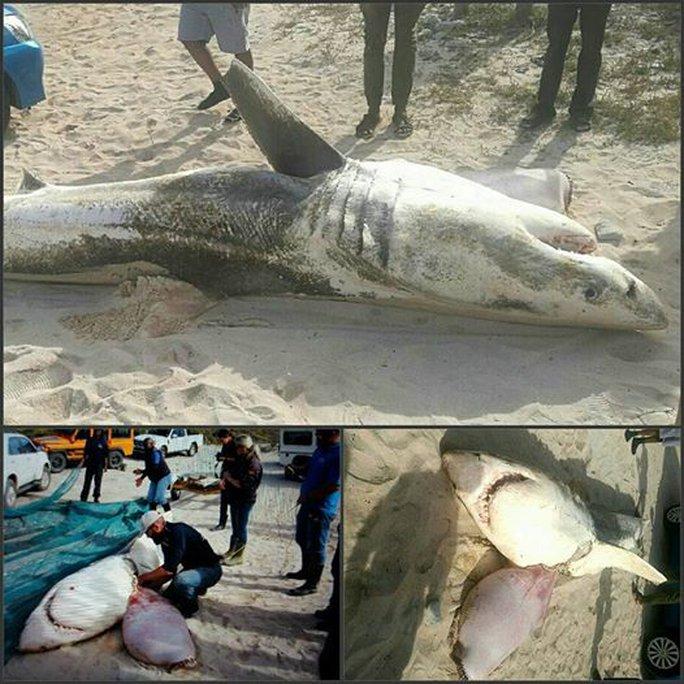 Kinh dị cá voi sát thủ moi gan cá mập trắng - Ảnh 1.