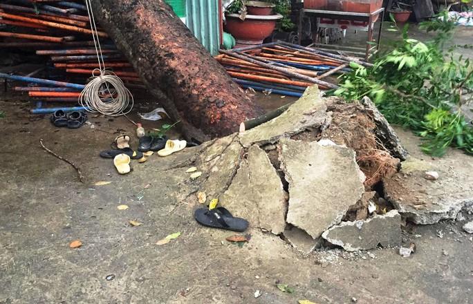 Tháo chạy khi cây cổ thụ đè sập mái nhà - Ảnh 2.
