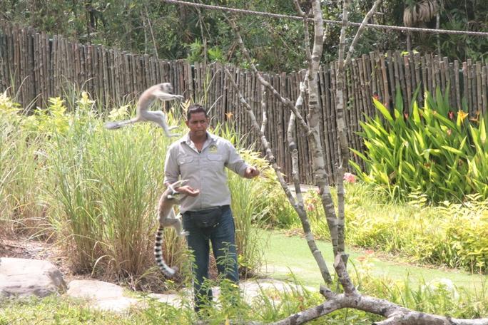 Mãn nhãn với màn biễu diễn thú ở Safari Phú Quốc - Ảnh 2.