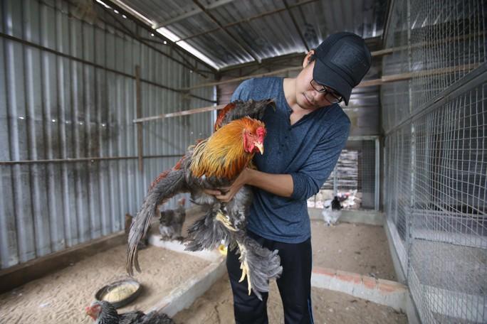 Gà Kỳ Lân khổng lồ (hay còn được gọi là gà Brahma), là loại gà có hai chùm lông như bộ râu xòe rộng ra 2 bên má, chân lông rậm tới chân. Gà có 5 ngón trên mỗi bàn chân và 3 cựa rất khỏe
