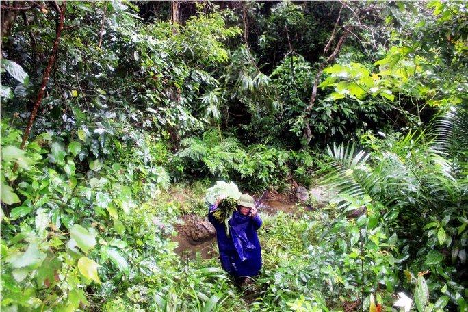 """Những thợ lá đang khai thác 'lộc rừng"""" giữa đại ngàn Hoành Sơn"""