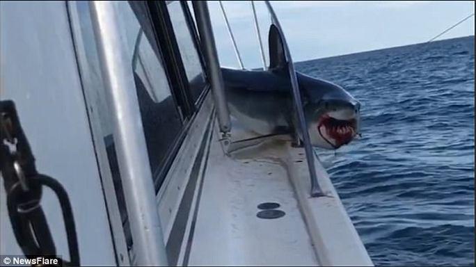 Mắc kẹt trên boong tàu, cá mập vùng vẫy thoát thân - Ảnh 1.