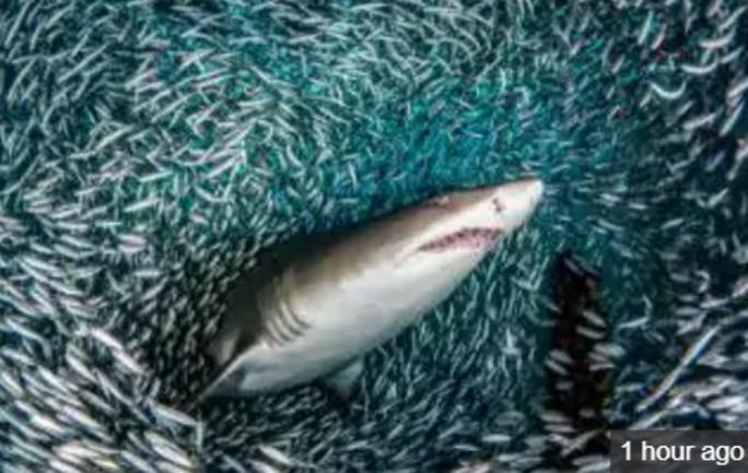 Hung thần cá mập xuyên qua cơn lốc cá - Ảnh 3.