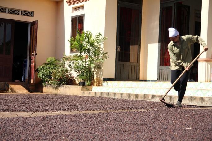 Cà phê Việt yếu từ tổ chức sản xuất đến chế biến - Ảnh 3.