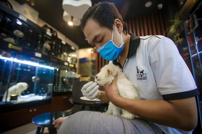 Choáng ngôi nhà 5 sao của thú cưng Sài Gòn - Ảnh 8.