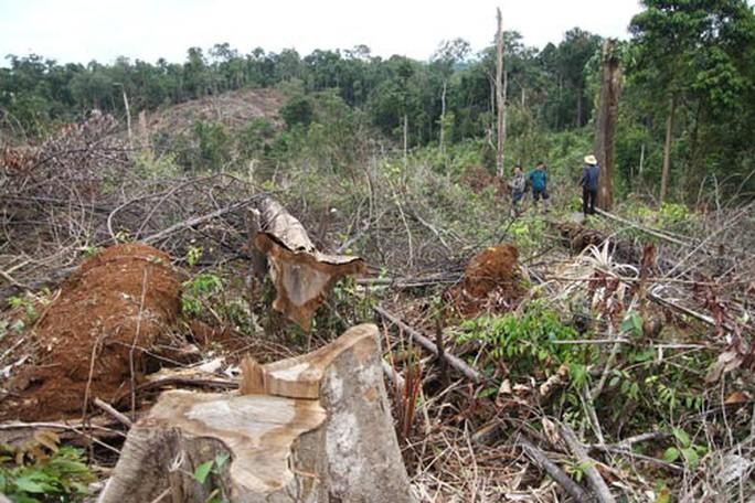 Khởi tố vụ án phá gần 7 ha rừng ở Lâm Đồng - Ảnh 1.