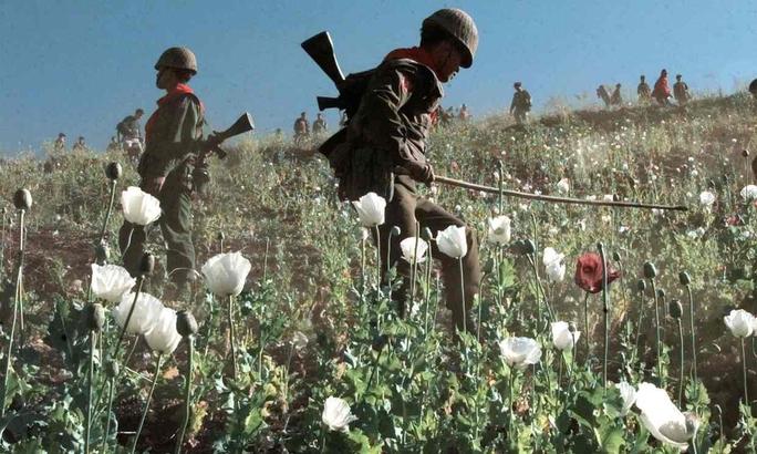 Myanmar là một trong những nước sản xuất ma túy hàng đầu thế giới. Ảnh: AP