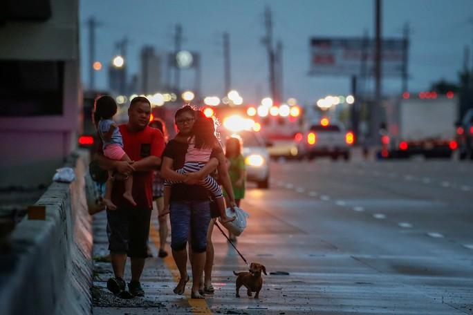 Chú chó biểu tượng cho sức mạnh Texas trong bão Harvey - Ảnh 8.