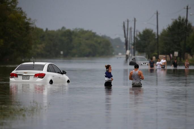 Chú chó biểu tượng cho sức mạnh Texas trong bão Harvey - Ảnh 7.