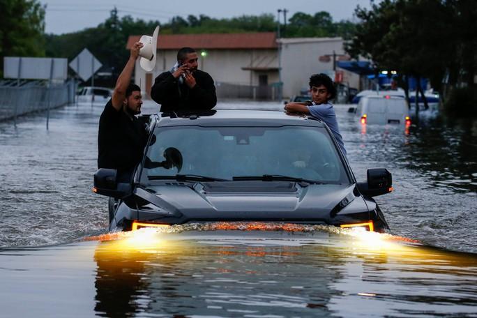 Chú chó biểu tượng cho sức mạnh Texas trong bão Harvey - Ảnh 6.
