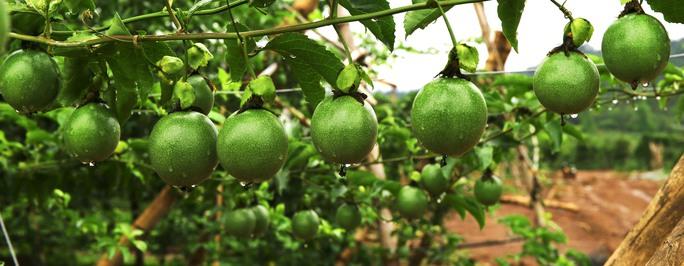 Bầu Đức bắt tay Thế giới di động cùng bán trái cây - Ảnh 1.