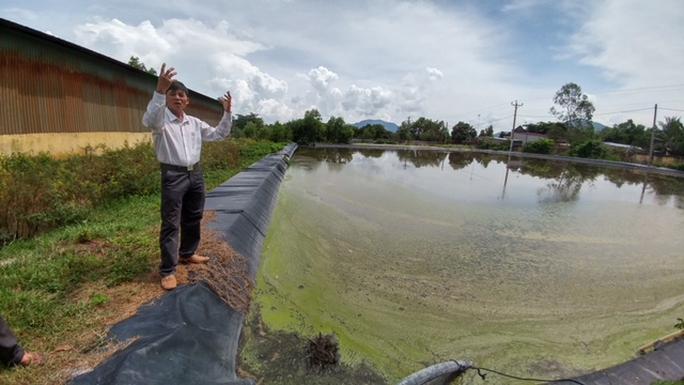 Trại nuôi heo xả thải ra hồ cấp nước - Ảnh 1.