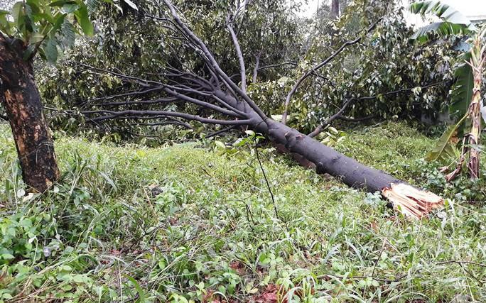TP HCM: 6 nhà bị cây đè trong cơn mưa - Ảnh 1.