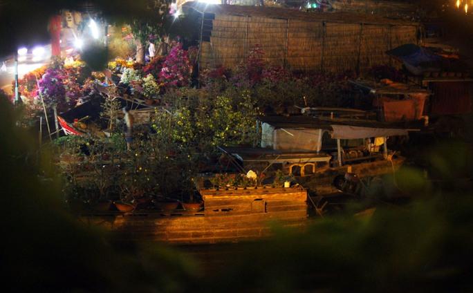 Chiều tối 23-1, ghe thuyền từ các tỉnh miền Tây như Bến Tre, Vĩnh Long, Đồng Tháp, Hậu Giang,... đậu kín cả khúc kênh. Người bán cũng đã dọn cây kiểng, hoa cảnh lên trên bờ bày bán.