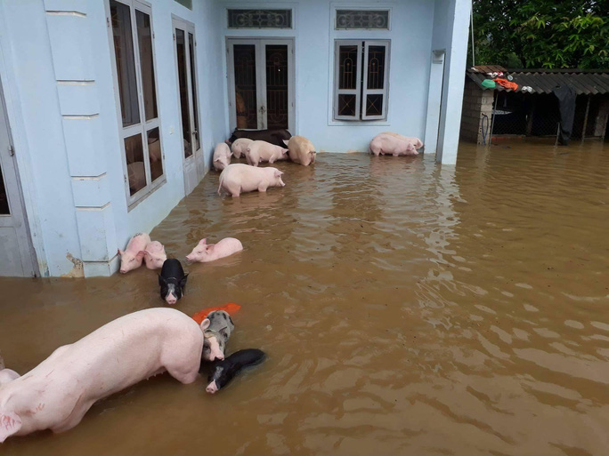 Cận cảnh Bắc Trung Bộ chìm trong mưa lũ - Ảnh 11.