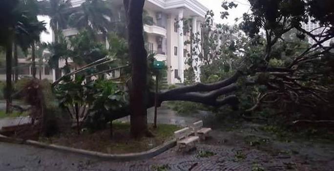 Gần 50 năm sống ở Nha Trang mới thấm thía bão - Ảnh 2.