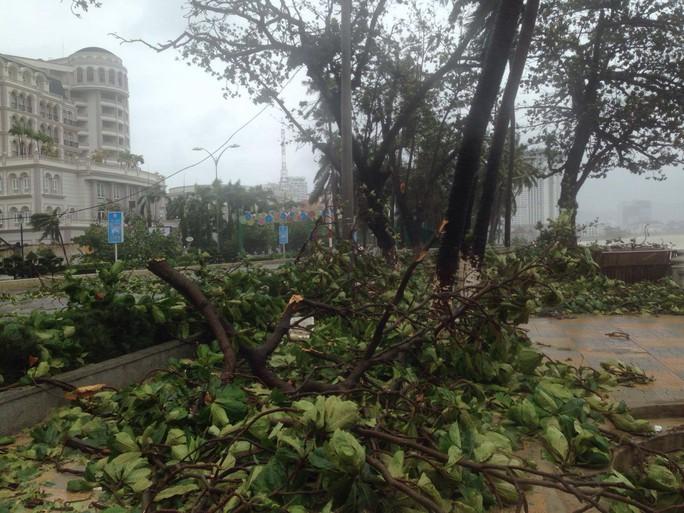 Bão số 12 tan, Khánh Hòa tan hoang, ít nhất 11 người chết - Ảnh 3.