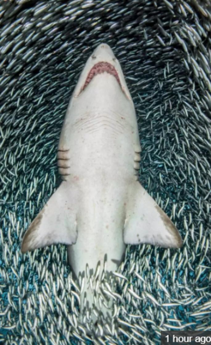 Hung thần cá mập xuyên qua cơn lốc cá - Ảnh 2.