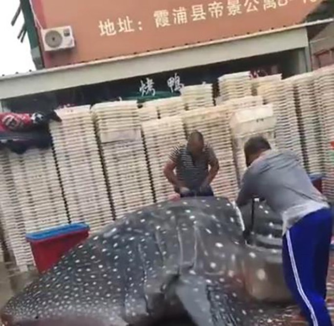 Trung Quốc: Bị bắt vì chở cá mập voi quý hiếm bán cho nhà hàng - Ảnh 3.