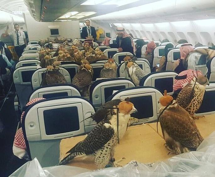 Bức ảnh 80 con chim ưng trên khoang máy bay gây sốt những ngày qua. Ảnh: Daily Mail