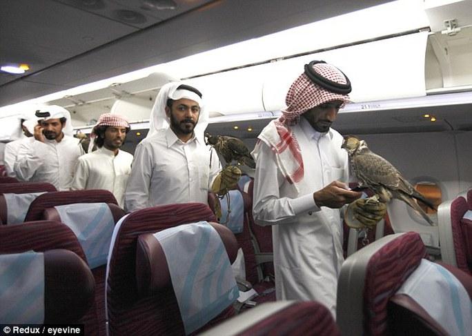 Trong ảnh là cảnh tượng chủ nhân đưa chim ưng của họ rời Doha đến thủ đô Baku của Azerbaijan tránh nóng. Ảnh: Redux