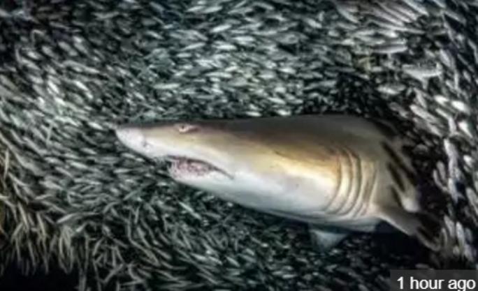 Hung thần cá mập xuyên qua cơn lốc cá - Ảnh 4.