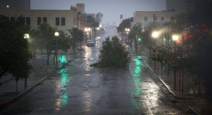 Mỹ: Cá sấu đi tránh bão Harvey - Ảnh 6.