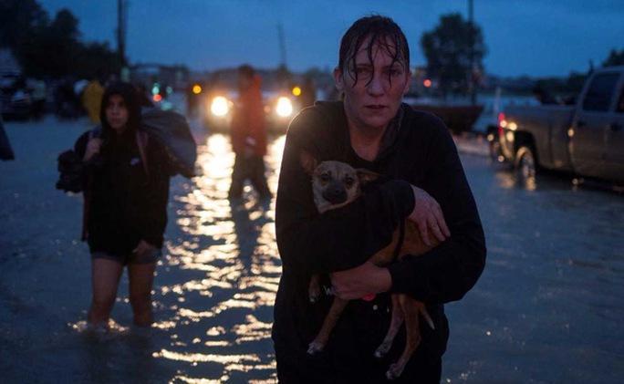 """Mỹ: """"Đảo kiến lửa"""" xuất hiện trong bão Harvey - Ảnh 5."""