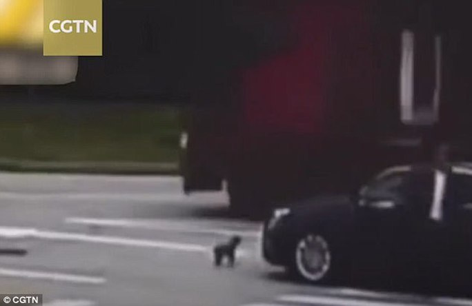 Chủ bị đâm, chó cưng đuổi theo xe gây tai nạn - Ảnh 1.