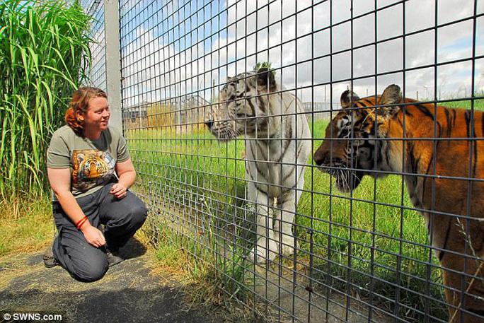 Hổ Malaya quý hiếm vồ chết nhân viên sở thú - Ảnh 1.