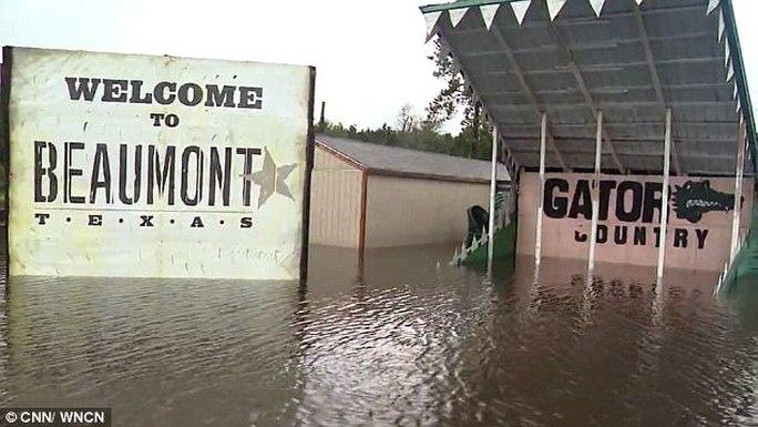 Mỹ: Mối lo 350 cá sấu sổng chuồng vì bão Harvey - Ảnh 1.