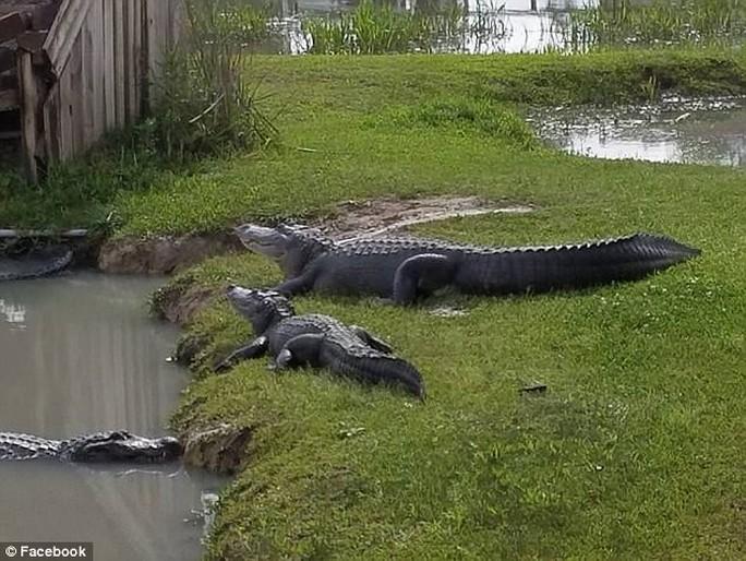 Mỹ: Mối lo 350 cá sấu sổng chuồng vì bão Harvey - Ảnh 3.
