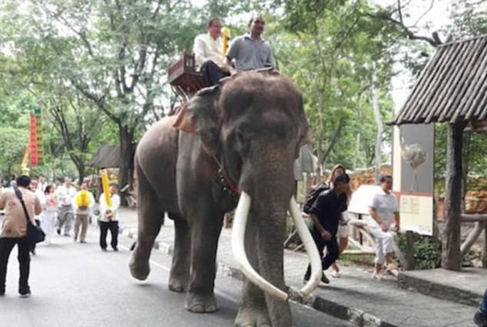 Thái Lan: Chú voi nổi tiếng lên cơn điên siết chết chủ - Ảnh 1.