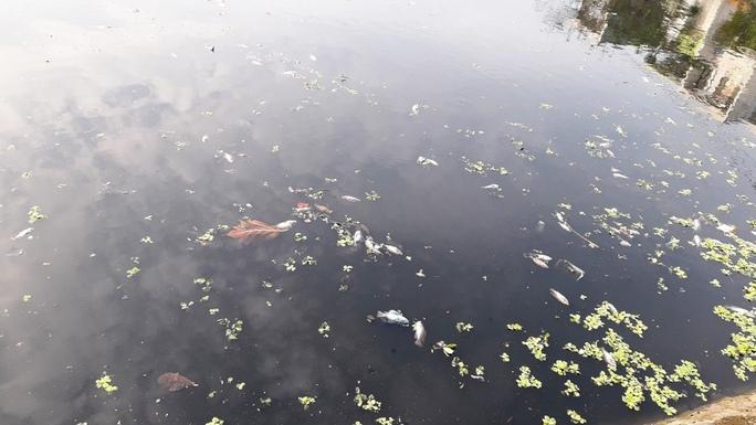 Đà Nẵng: Cá chết nổi trắng hồ điều tiết Thanh Lộc Đán