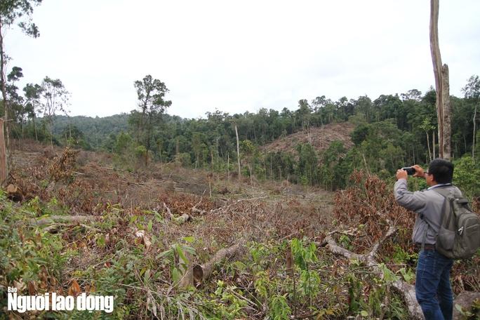 Lâm Đồng: Rừng bị triệt hạ không thương tiếc - Ảnh 6.
