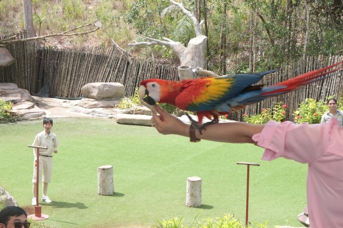 Mãn nhãn với màn biễu diễn thú ở Safari Phú Quốc - Ảnh 5.