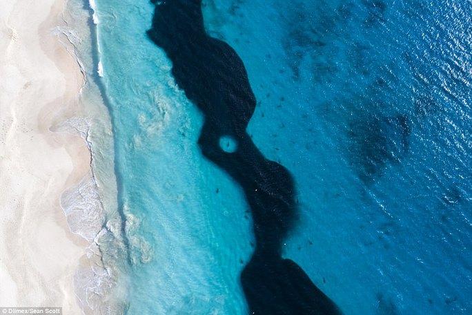 Kinh hoàng nhóm học sinh bơi lội bên trên 400 con cá mập - Ảnh 5.