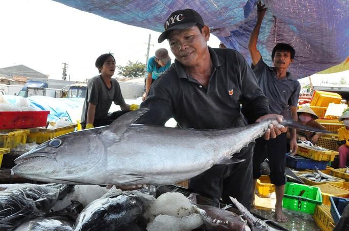Nhiều tàu cá của ngư dân Quảng Ngãi trúng đậm sau những chuyến đi biển dài ngàyẢnh: Tử Trực