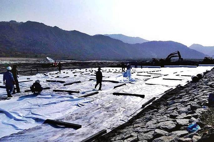 Cây chết gần Nhà máy điện Vĩnh Tân là do ngập úng - Ảnh 1.