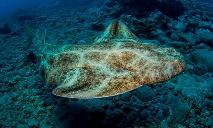Cá mập tự phá thai khi bị bắt - Ảnh 1.