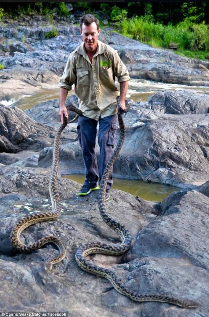 Sau bão lũ, dân Úc vất vả đối phó với rắn. Ảnh: FACEBOOK