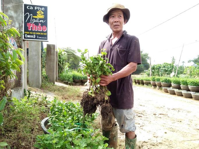 Thủ phủ hoa tết Quảng Ngãi và Quảng Nam tiêu điều sau lũ dữ - Ảnh 5.