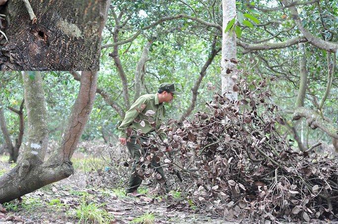 Tàn độc với rừng - Ảnh 1.