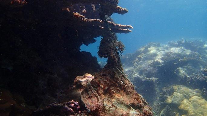 Biển Việt Nam bị đầu độc quá nhiều! - Ảnh 2.